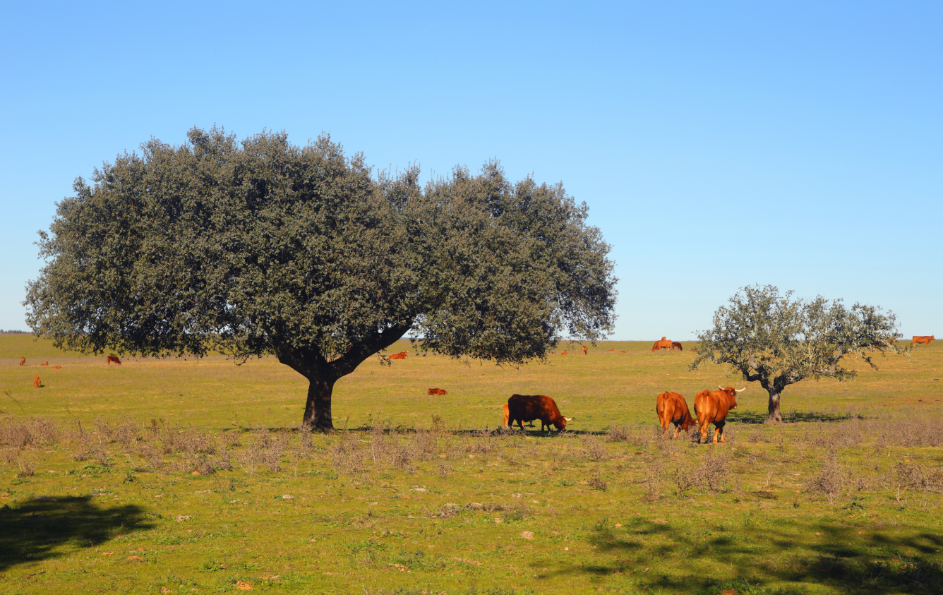 The Portuguese farming hidden treasure