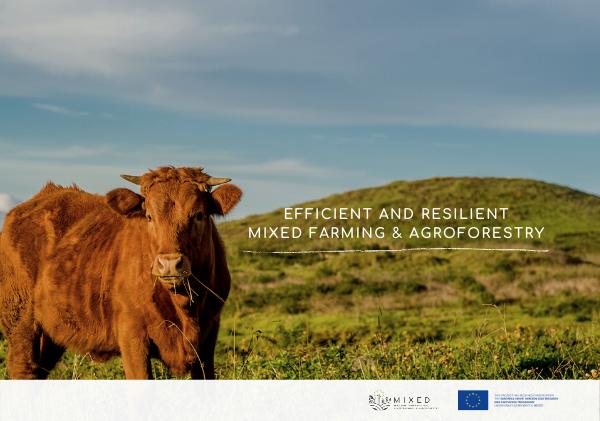 MIXED: O novo projeto H2020 com o objetivo de explorar diferentes tipos de sistemas agroflorestais mistos